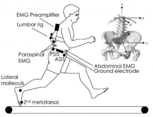 Changes in three dimensional lumbo-pelvic kinematics and trunk muscle activity with speed and mode of locomotion